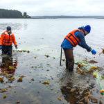 i merluzzi stanno scomparendo dall'alaska